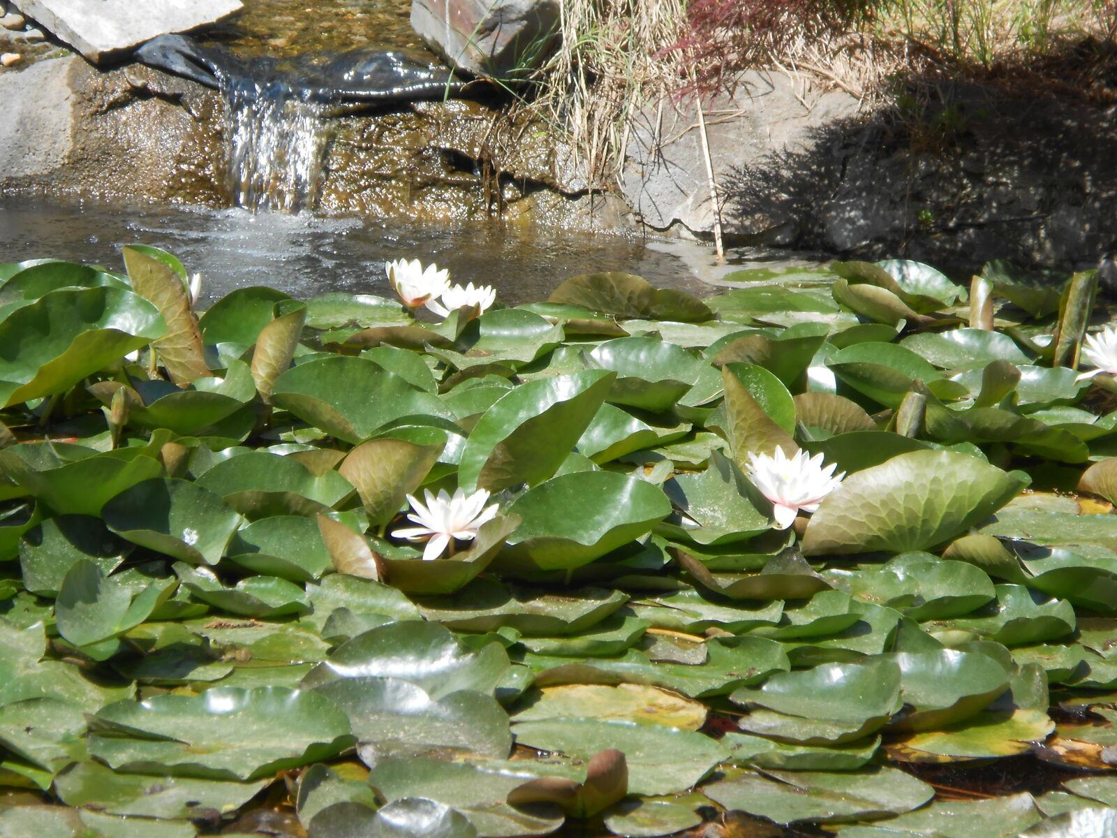 "Nikon Coolpix S4300 sample photo. ""Pond, waterlily"" photography"