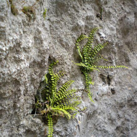 rock, nature, stone, Nikon COOLPIX S225