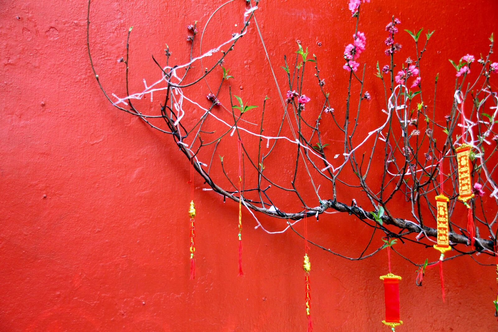 """Canon EOS 1100D (EOS Rebel T3 / EOS Kiss X50) sample photo. """"Fortune, tradition, festival"""" photography"""