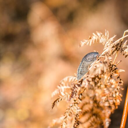 snail, slug, fall, Canon EOS 6D