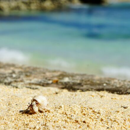 cancer, shell, beach, Sony NEX-5