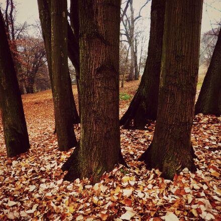 autumn, tribes, trees, Panasonic DMC-FS40