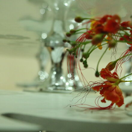 combination, flowers, glass, illusionist, Canon EOS 760D