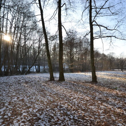 cold, forest, frost, trees, Nikon D3100