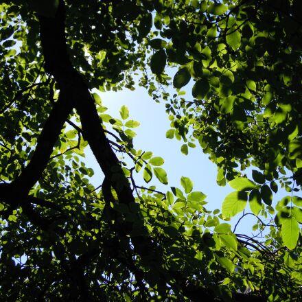 tree, leaves, shadow, Nikon COOLPIX S5100