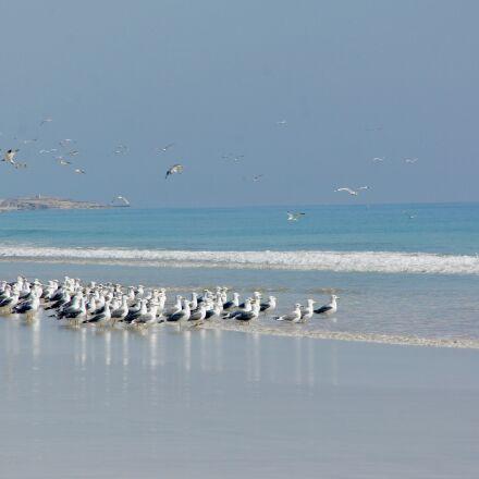 gulls, sea, seagull, Sony NEX-5
