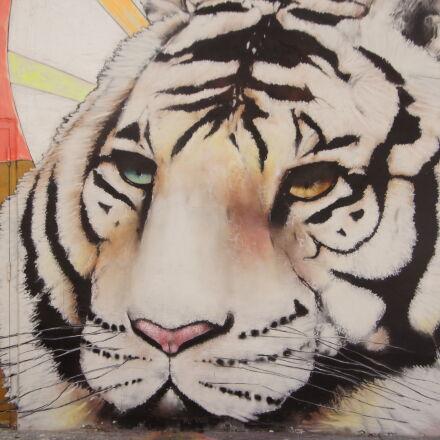 animal, art, cat, color, Sony SLT-A55V