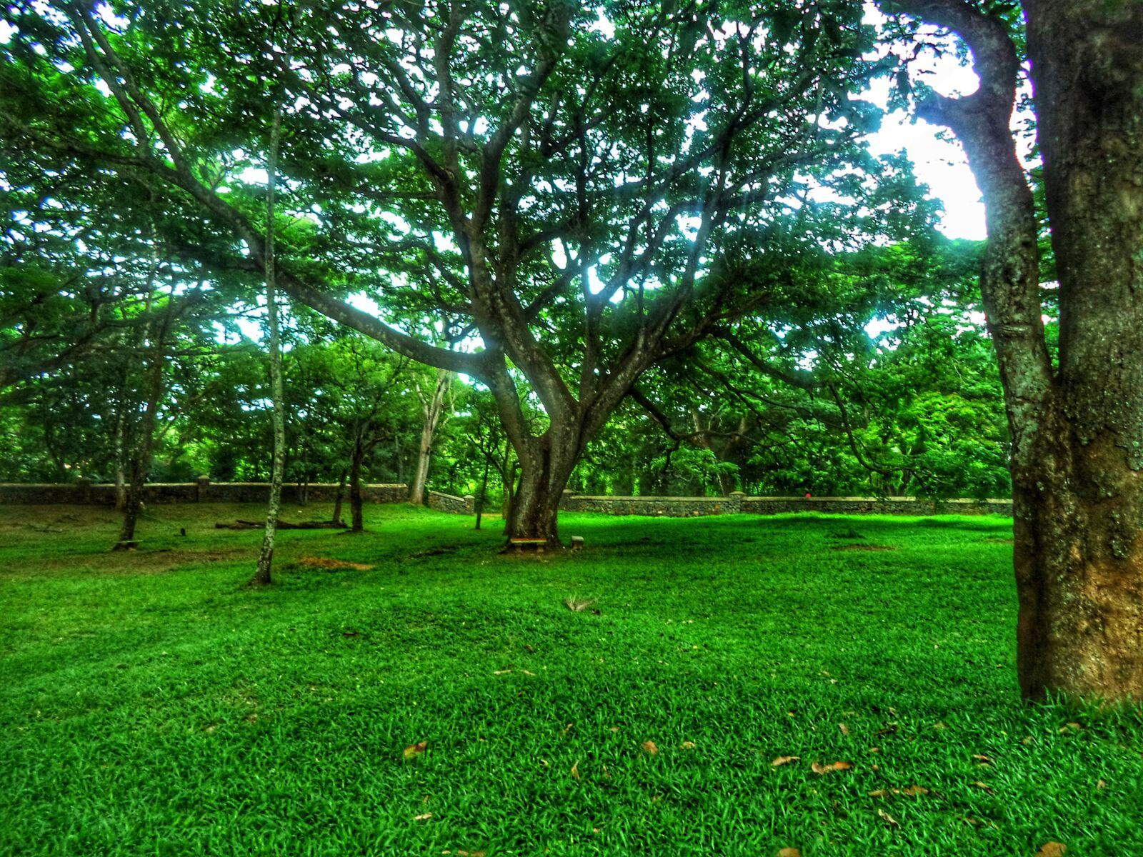 tree, grass, green