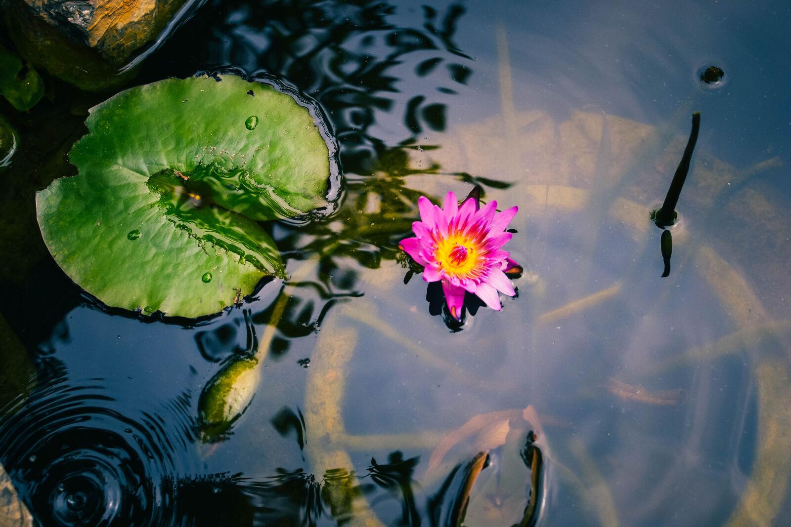 beautiful, flowers, buddha, clean