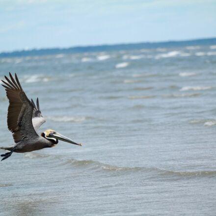animal, beach, bird, Samsung NX30