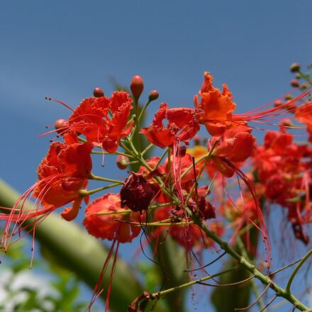 flowers, landscape, colombia, Panasonic DMC-FZ5
