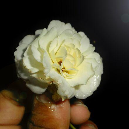 beautiful, flowers, Nikon COOLPIX S3600