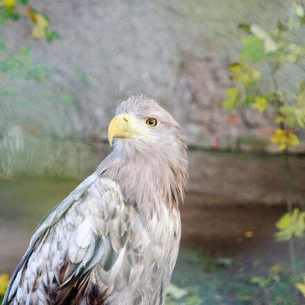 bird, eagle, profile, eag, Nikon D7000