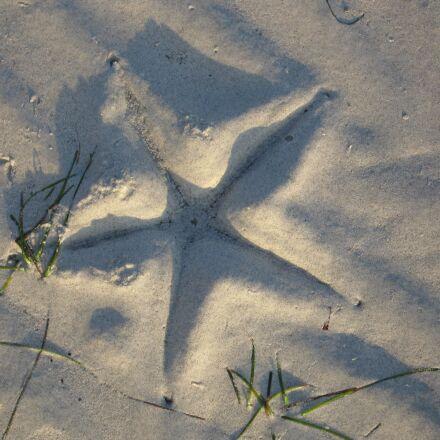 starfish, beach, sea, Canon POWERSHOT S70
