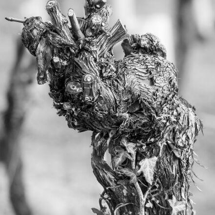 vine, rebstock, winegrowing, Samsung NX300M