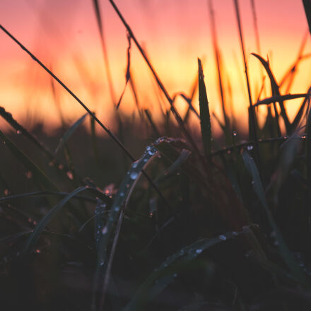 grass, with, water, drops, Canon EOS 6D