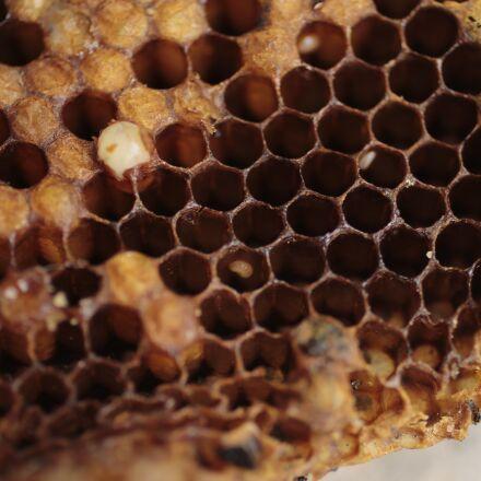 bee, honey, beekeeping, Canon EOS 80D