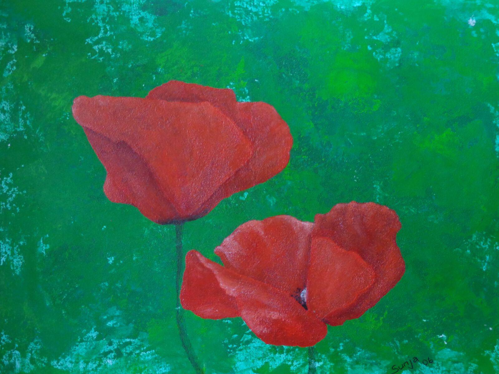 "Sony DSC-W690 sample photo. ""Poppy, flower, flowers"" photography"
