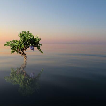 nature, tree, water, Panasonic DMC-FS10