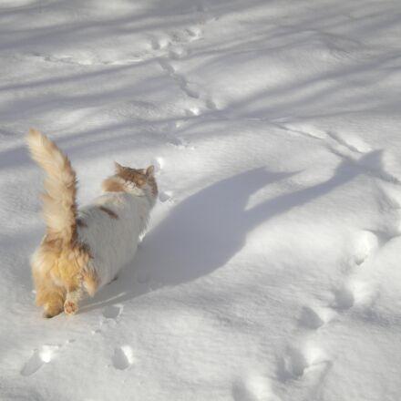 cat walking, in the, Nikon COOLPIX S220
