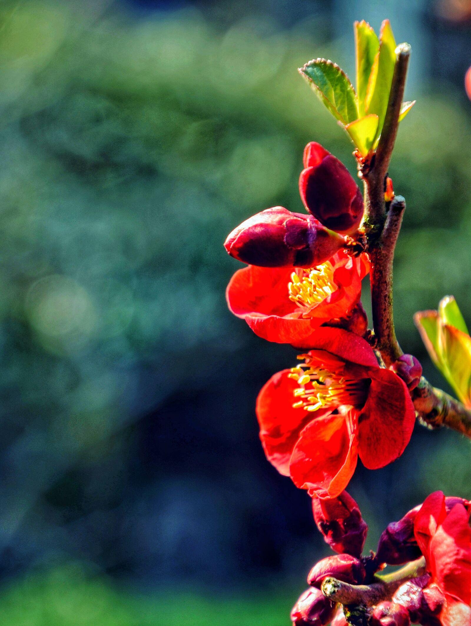 "Nikon D5100 sample photo. ""Cherry, cherry, blossom, flower"" photography"