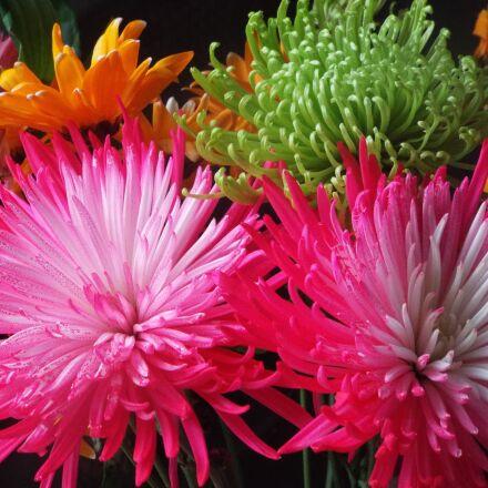 flowers, exotic, green, Fujifilm FinePix S9400W S9450W