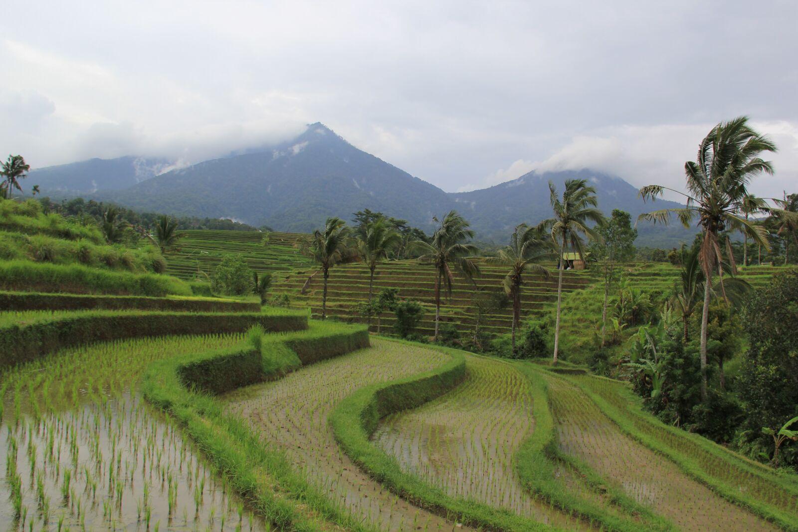 "Canon EOS 60D sample photo. ""Field, bali, asia"" photography"