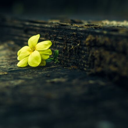 yellow flowers, floral, nature, Canon EOS 550D