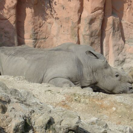 rhino, zoo, Sony DSC-P10