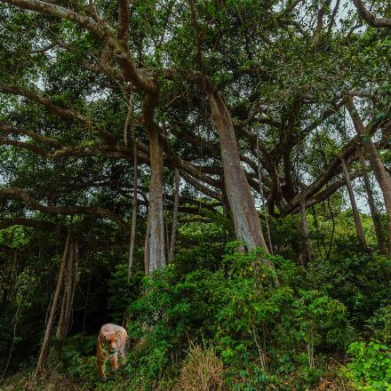 jungle, green, forest, Canon EOS 550D