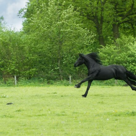 animal, black beauty, free, Sony ILCE-6000