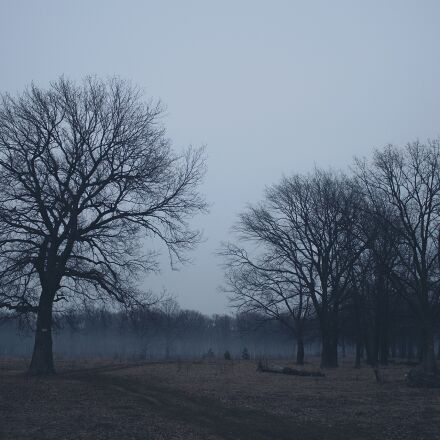 forest, twilight, nature, Canon EOS 500D