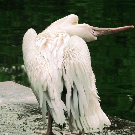bird, stretching, zoo, Fujifilm FinePix S4500