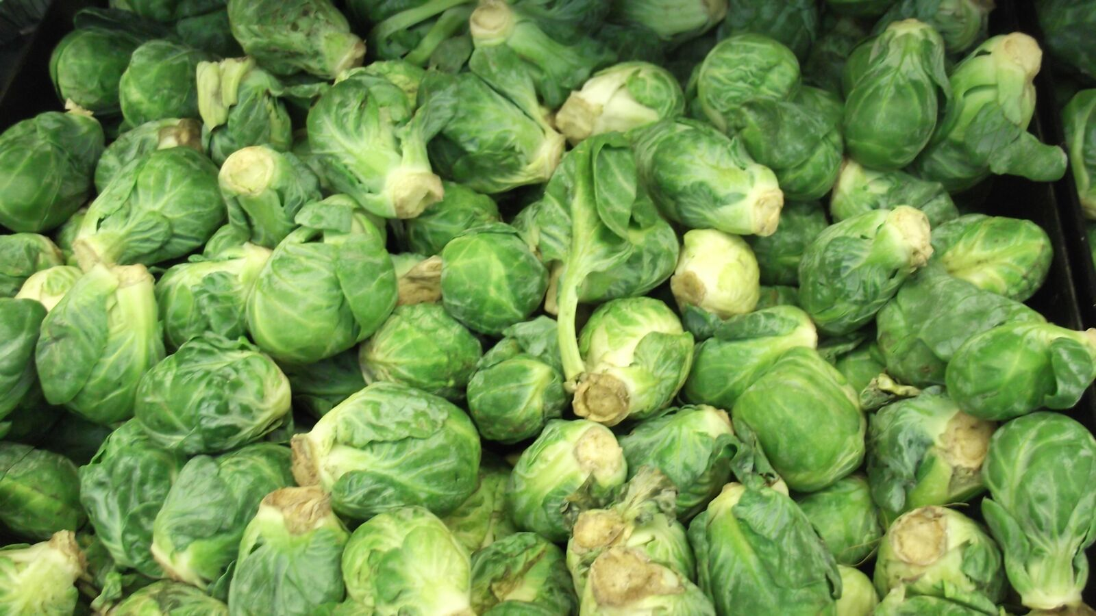 """Fujifilm FinePix L30 sample photo. """"Brussels sprout, vegetable, food"""" photography"""