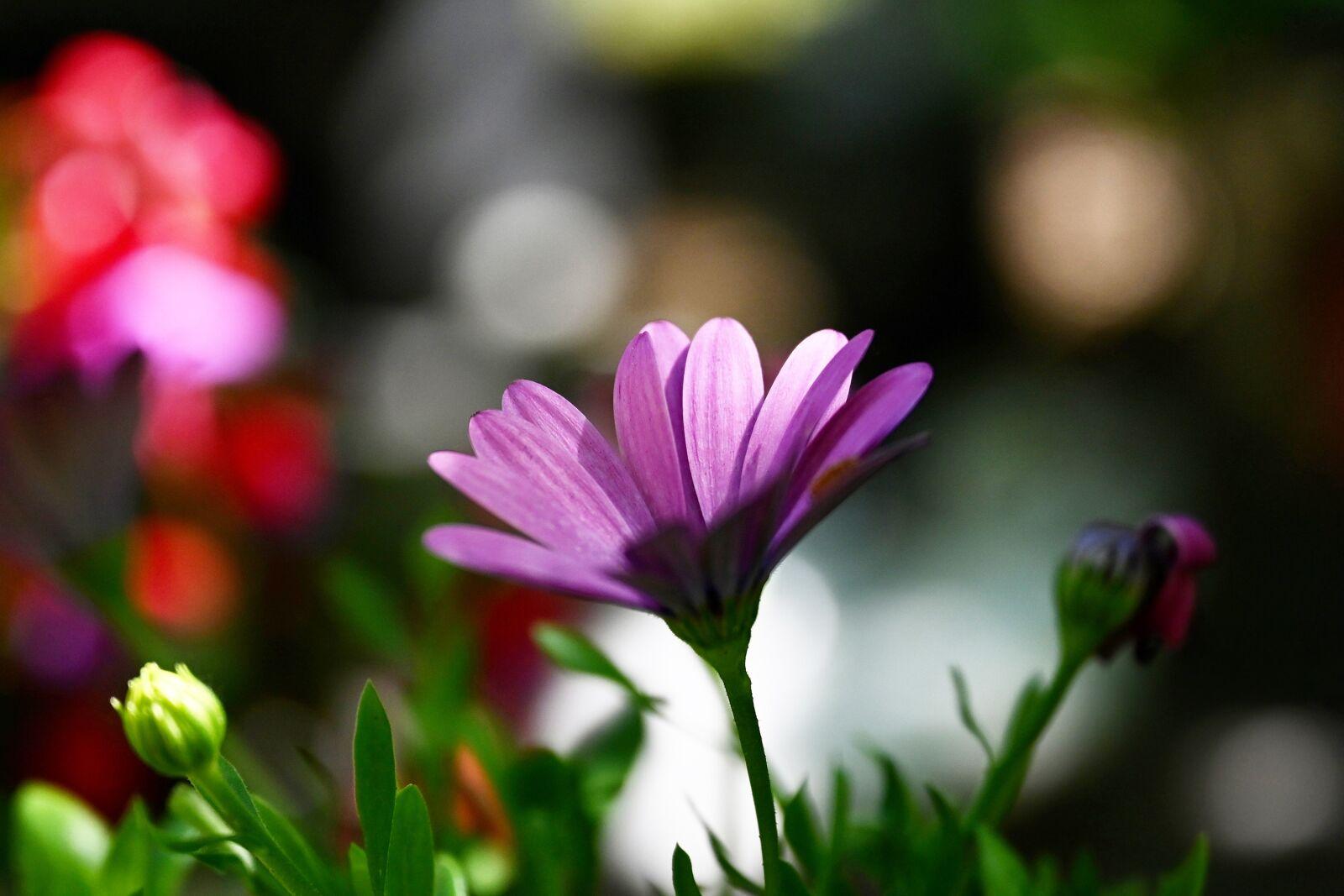 "Nikon Z6 sample photo. ""Flower, colorful, blossom"" photography"