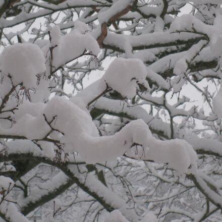 winter, tree, snow, Canon POWERSHOT A2000 IS