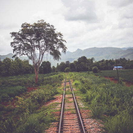 rail, tree, Canon EOS 550D