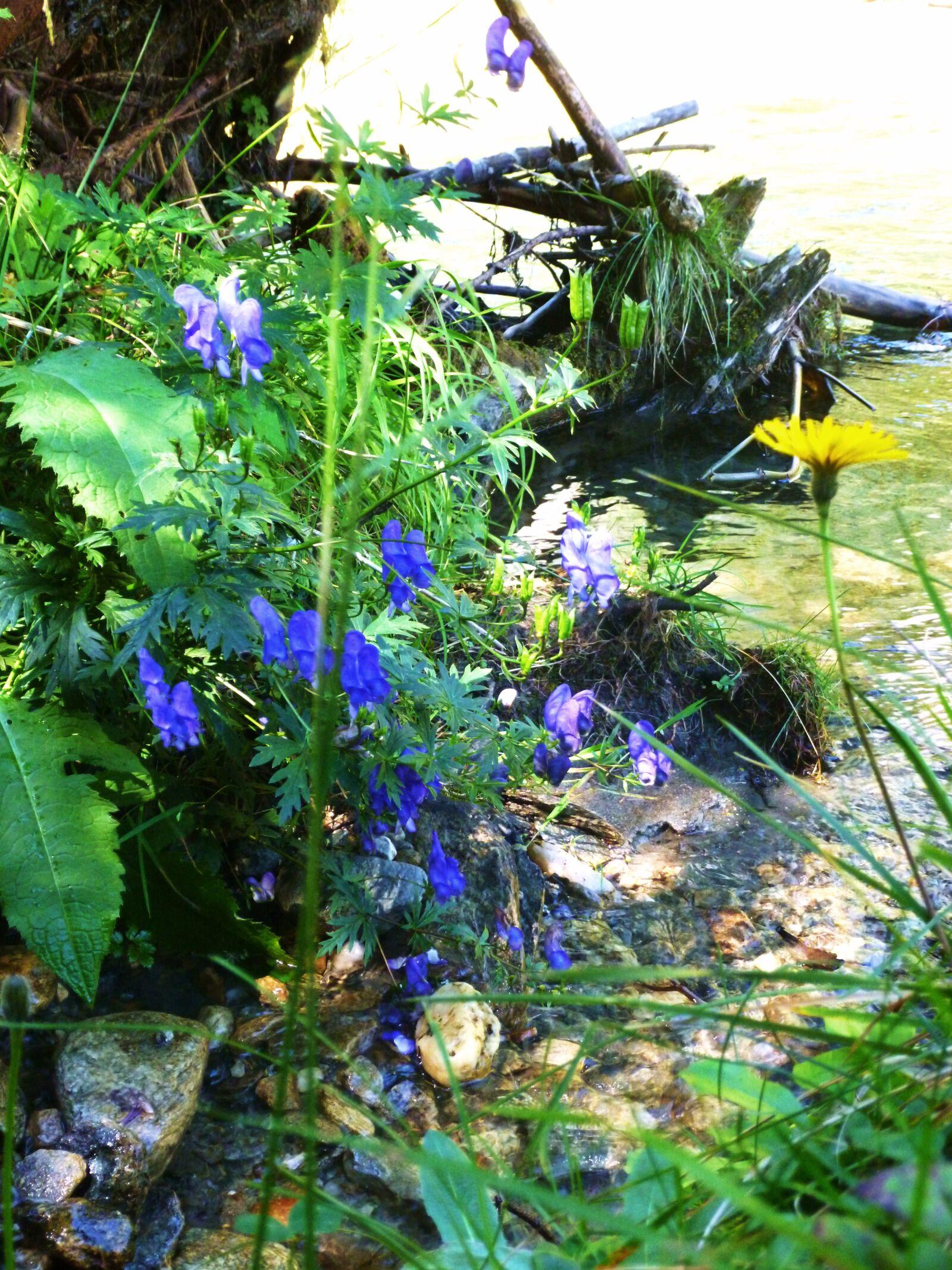 stream, flowers, mountain