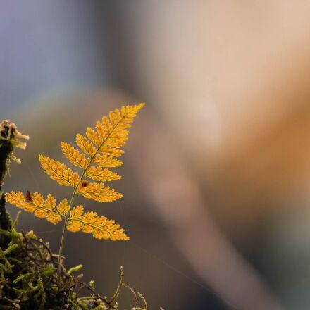 fern, rainforest, dry, Canon EOS 70D