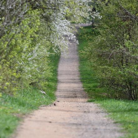 konrad, ciezki, meadow, path, Nikon D7000