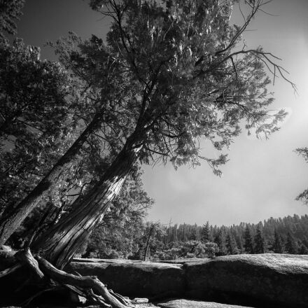 yosemite, mountains, forest, Canon EOS 5D MARK II