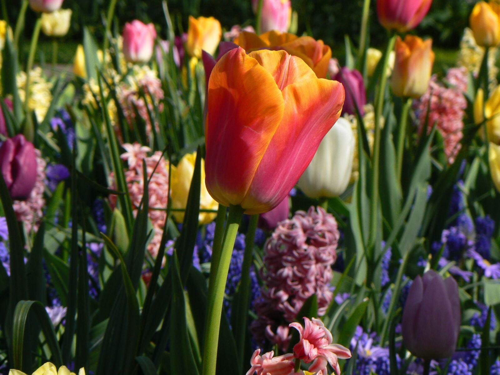 "Panasonic DMC-FZ7 sample photo. ""Plant, nature, garden"" photography"