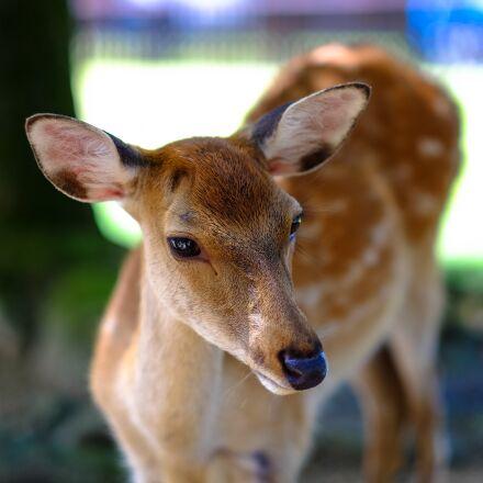 animal, close-up, deer, Fujifilm X-E2