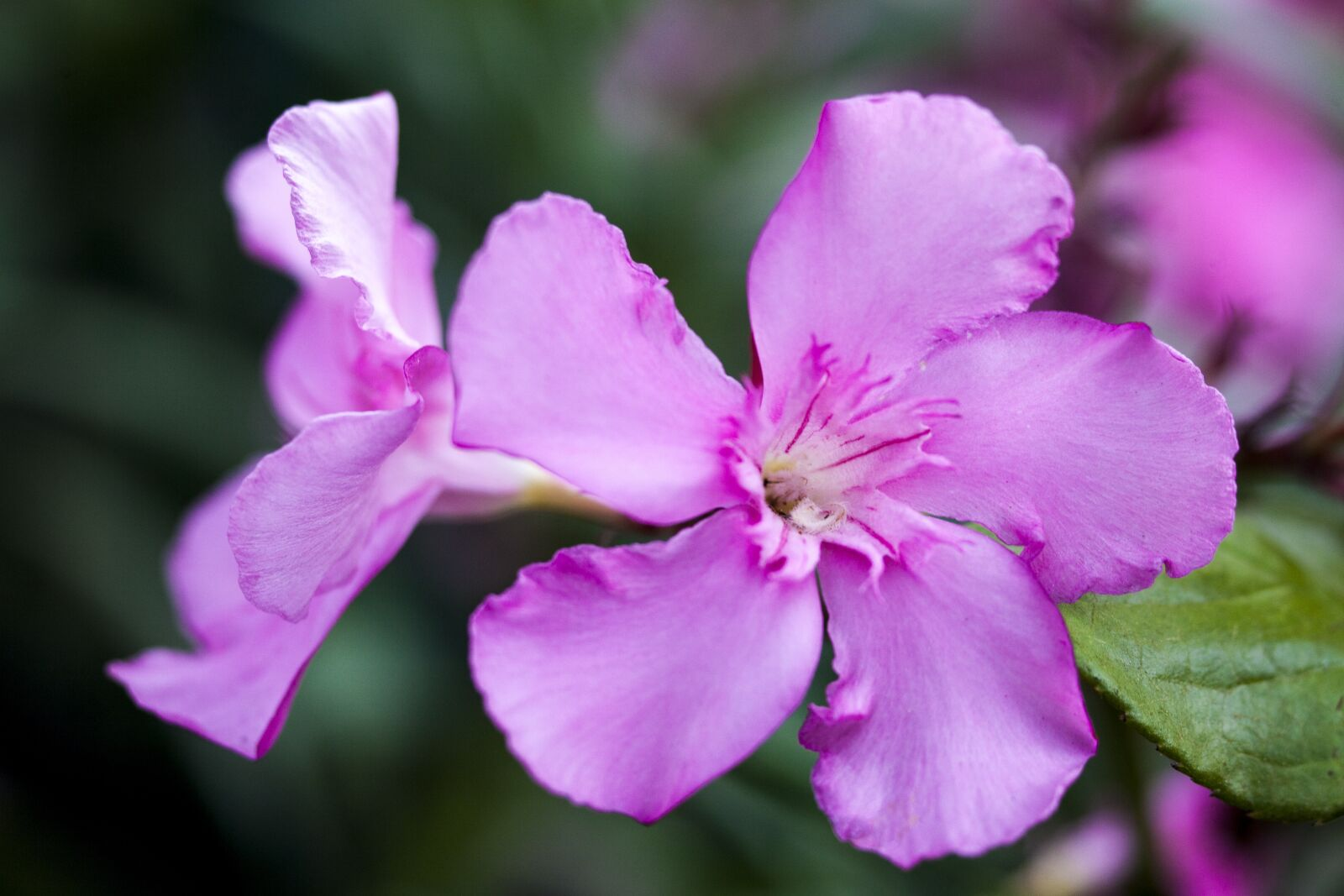 flower, close, flowers