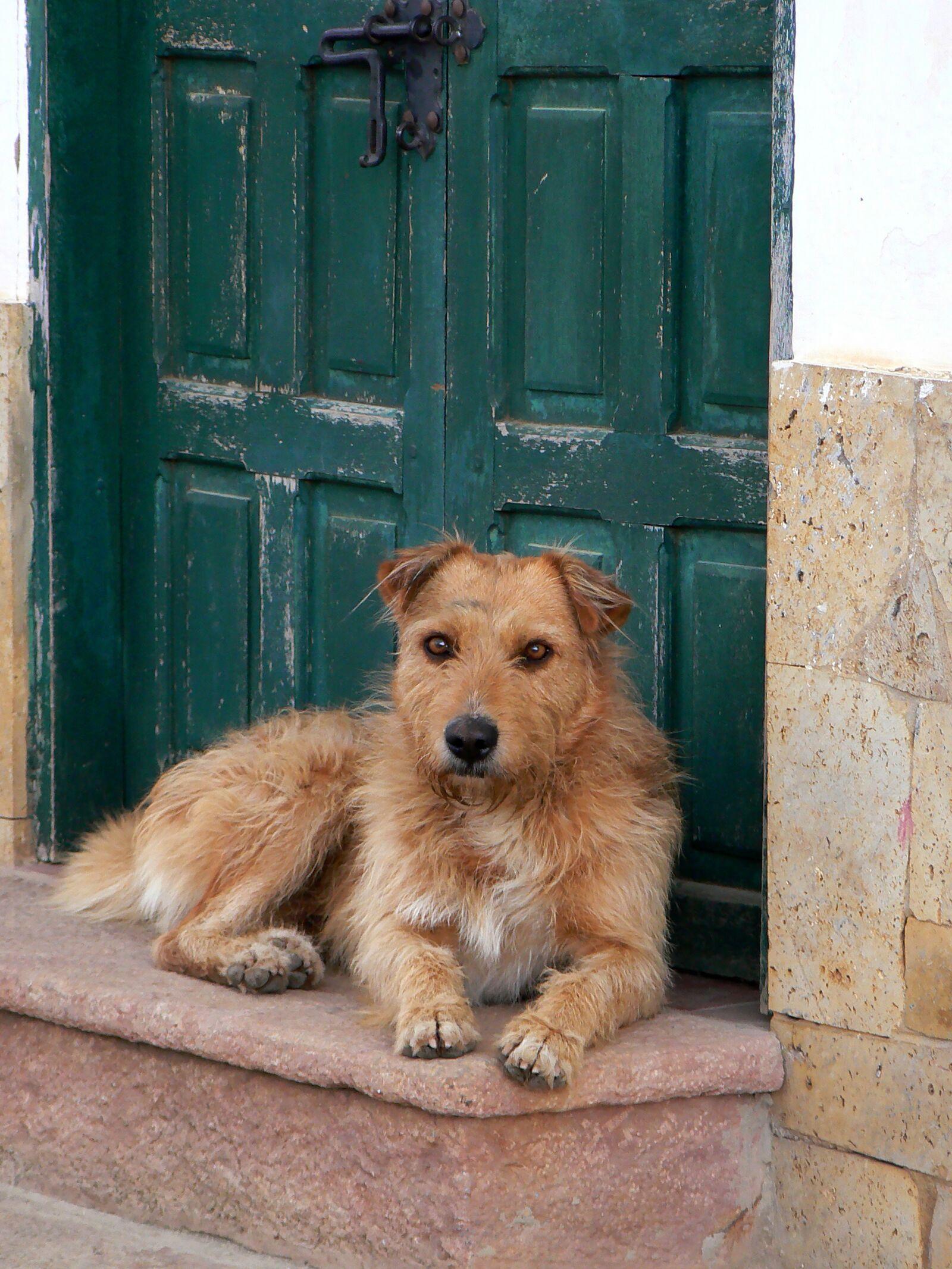 "Panasonic DMC-FZ7 sample photo. ""Villa de leyva, dog"" photography"