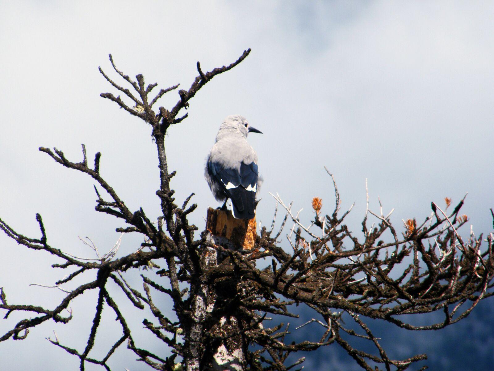 "Fujifilm FinePix S2000HD sample photo. ""Banff, tree, bird"" photography"