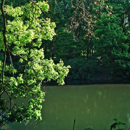 forest, pond, trees, Sony DSC-W30