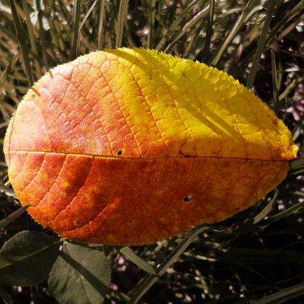 nature, yellow, orange, Panasonic DMC-FS40