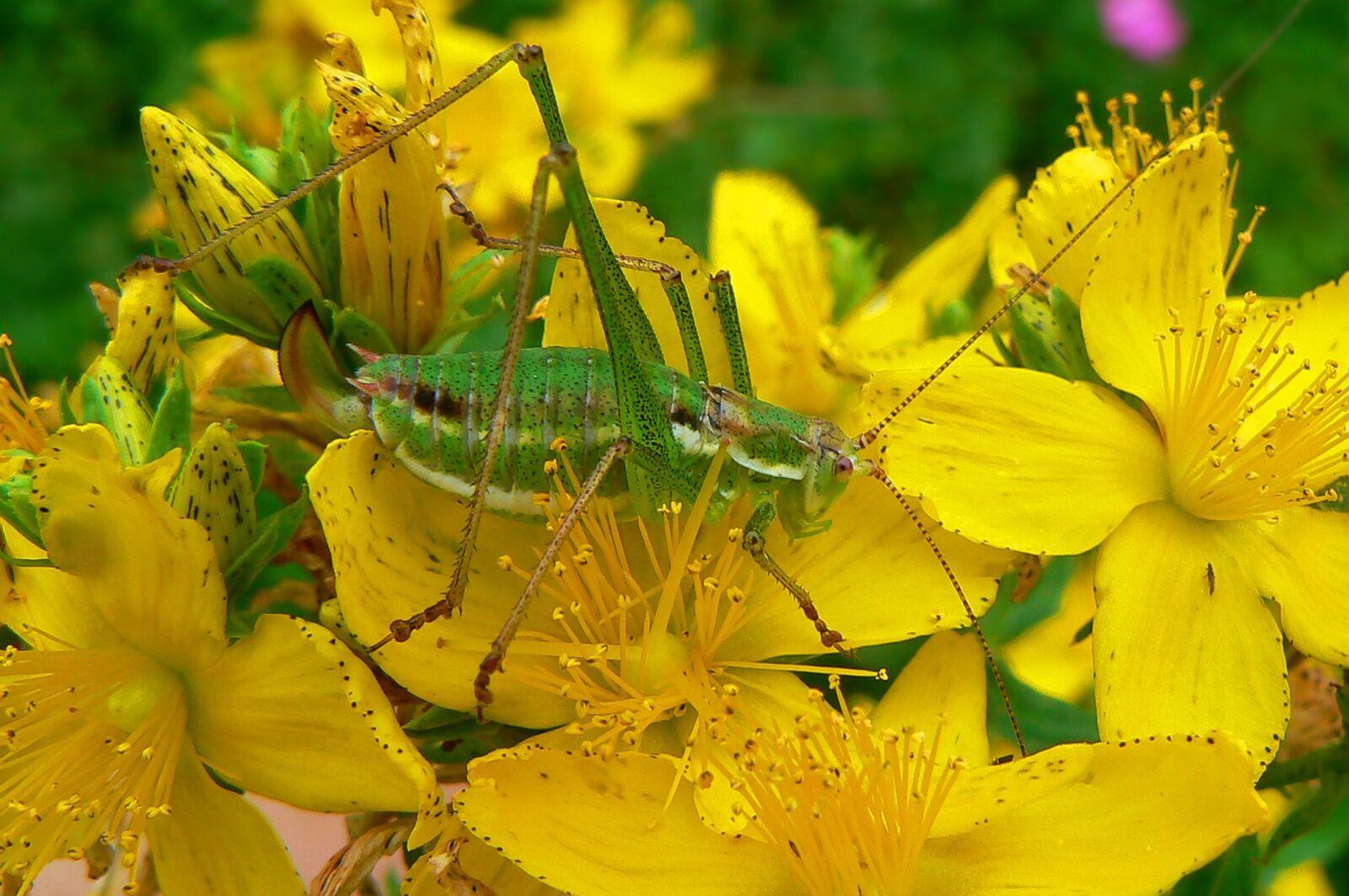 "Panasonic DMC-FZ7 sample photo. ""Nature, flower, flora"" photography"