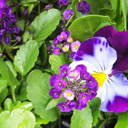 nature, spring, flowers, Fujifilm FinePix S3400